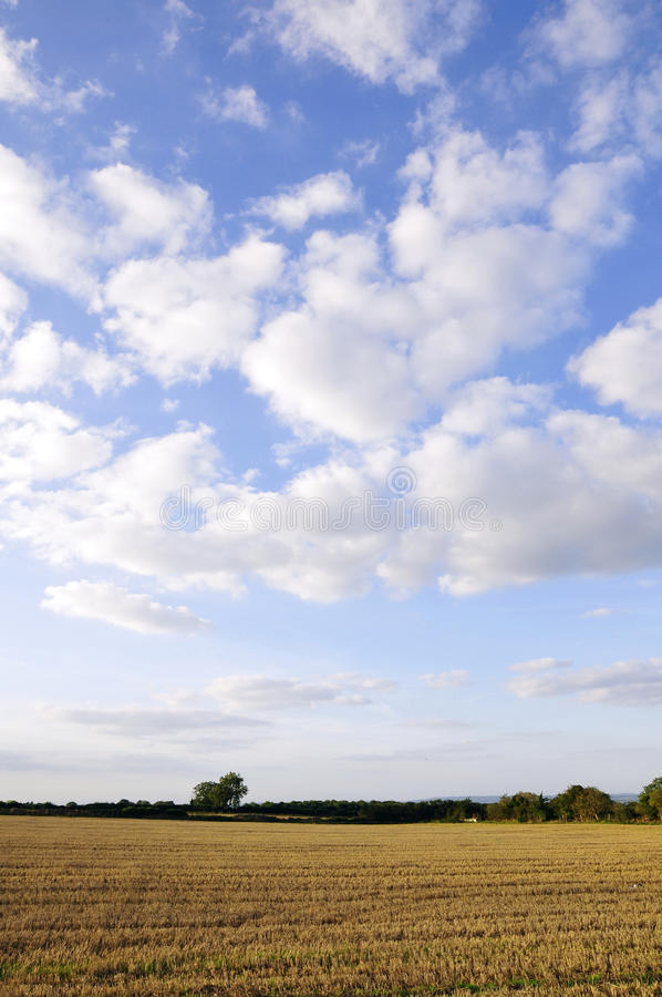 Farmland Crops. Crops on Farmland with a Beautiful Blue Sky Above royalty free stock images