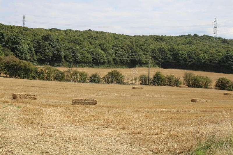 Farmland with crops harvested. Farmland with woodland behind. Trees. Harvested crops royalty free stock images