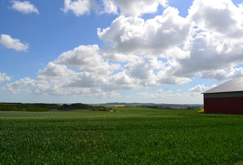 Farmland in Denmark. Green field on farm in Skanderborg, Denmark stock photo