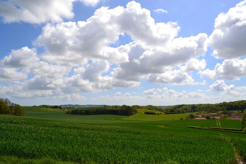 Farmland in Denmark. Green field on farm in Skanderborg, Denmark royalty free stock image