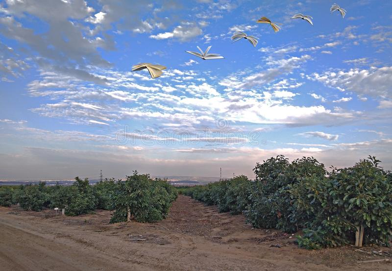 Farmland and flying books. Metaphor: farmland and flying books royalty free stock photo