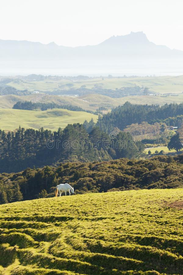 Farmland with horses in New Zealand royalty free stock images