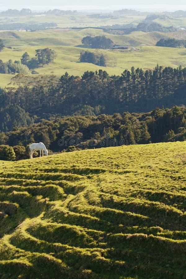 Farmland with horses in New Zealand stock photo