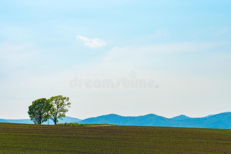 Farmland, Isolated Trees on hill with blue sky background in sunny day royalty free stock image