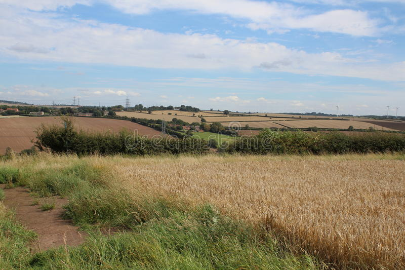 Farmland landscape with crops. Cereal crops on farmland stock images