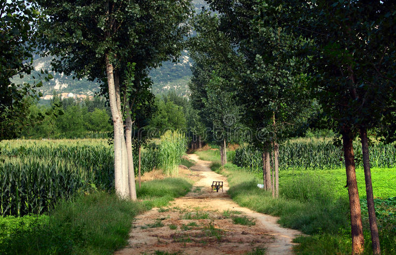Download Farmland  lined path stock photo. Image of leaves, park - 21404666