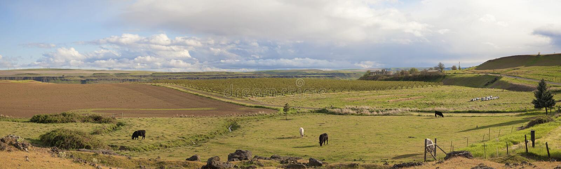 Farmland at Maryhill Washington Panorama royalty free stock images