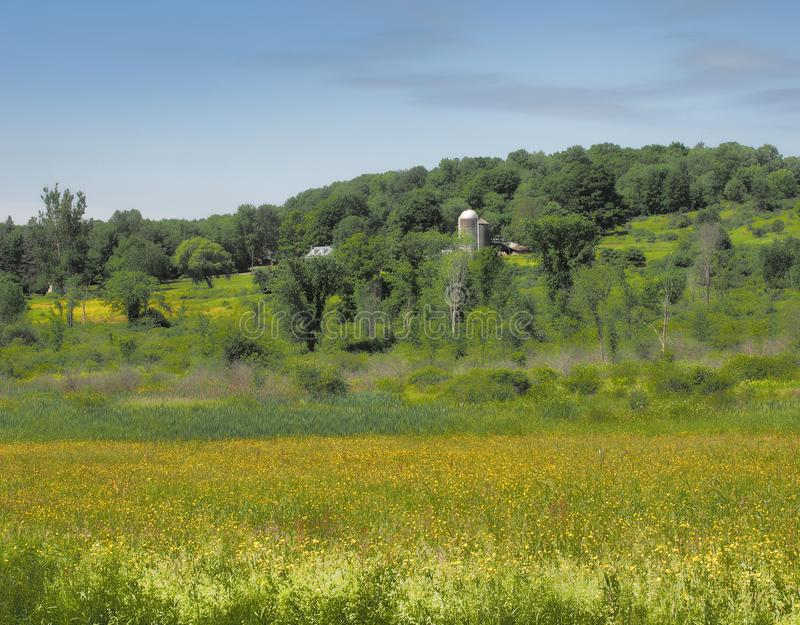 Buttercups and farmland stock images