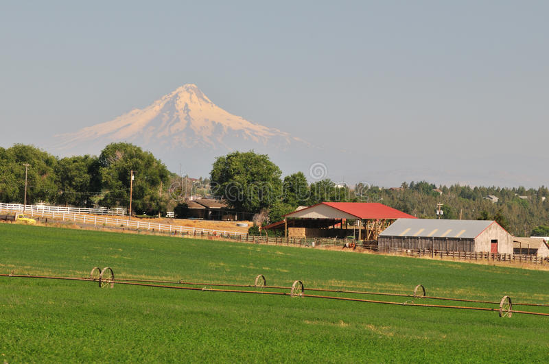 Download Farmland And Mt. Hood Stock Photo - Image: 23453990