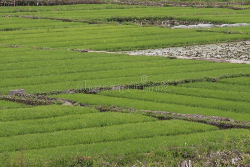 Farmland stock photography
