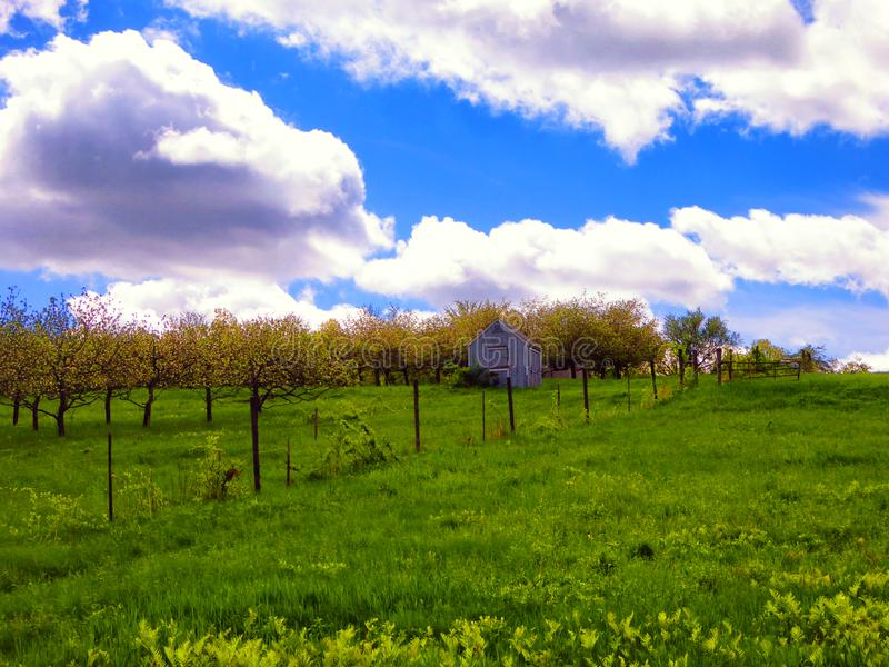 Farmland in Simsbury Connecticut. Open filed in the summer with a barn in simsbury connecticut United States royalty free stock photos