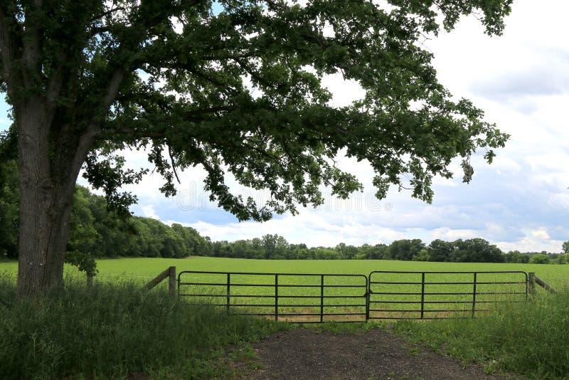Farmland tree shadows fence bright sunny day. Farmland tree shade with a  fence on a bright sunny day stock image