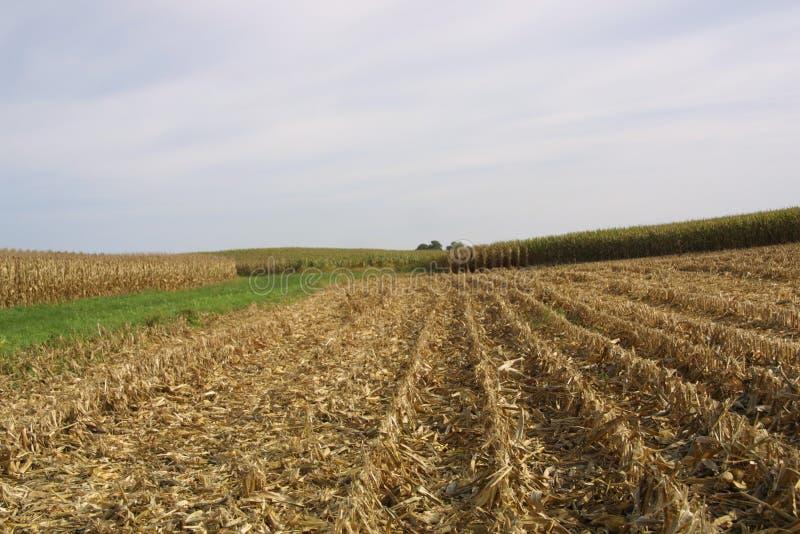 Farmland USA в Иллинойсе 2019 II-A стоковые изображения rf