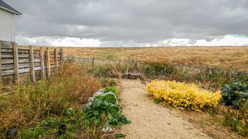 Farmland with Fencing and Yellow Plants stock images