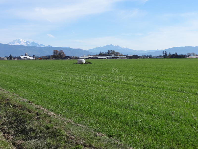 farmlands zdjęcia royalty free