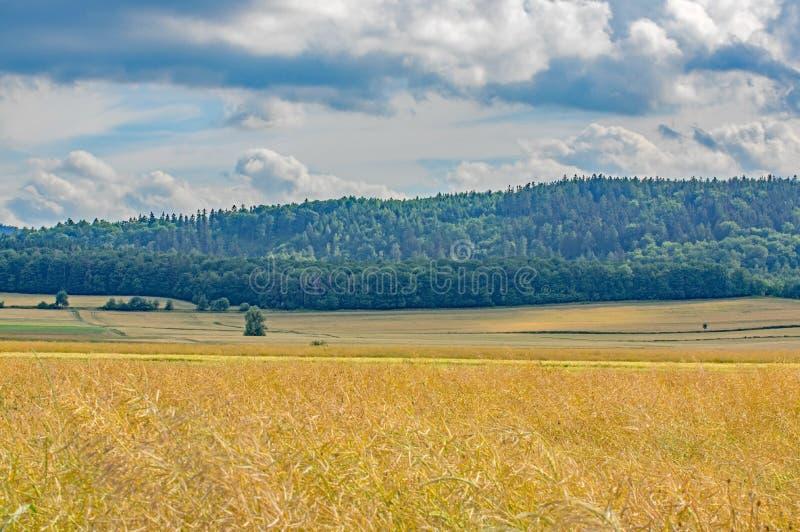 farmlands obraz royalty free