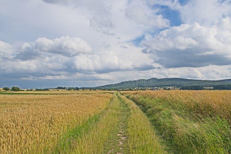 farmlands fotografia stock