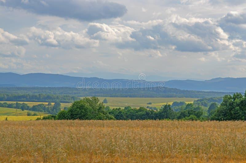 farmlands obrazy stock