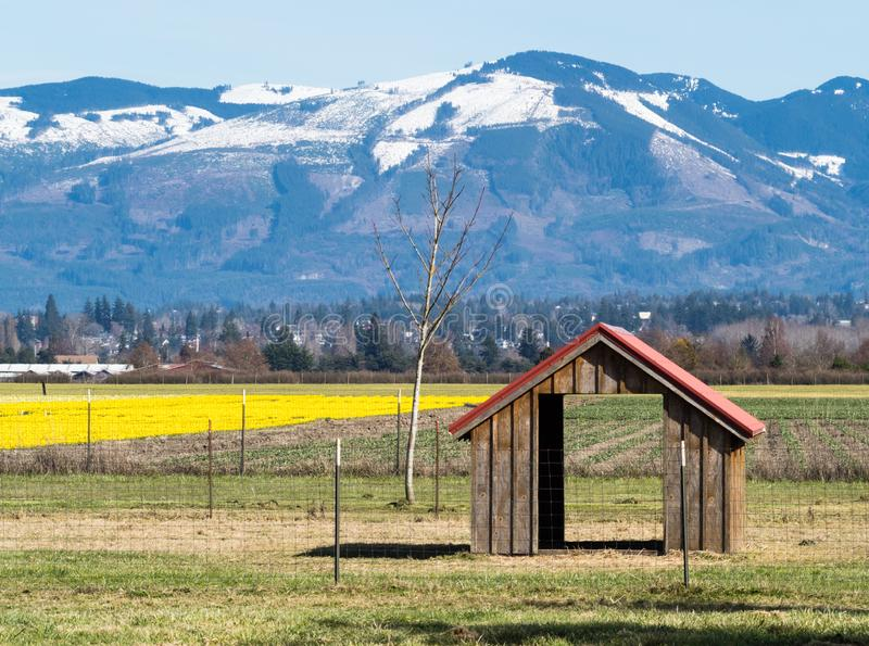 Farmlands with daffodil fields in Washington state, USA. Skagit Valley farmlands with blooming daffodil fields in spring - Washington state, USA stock photography