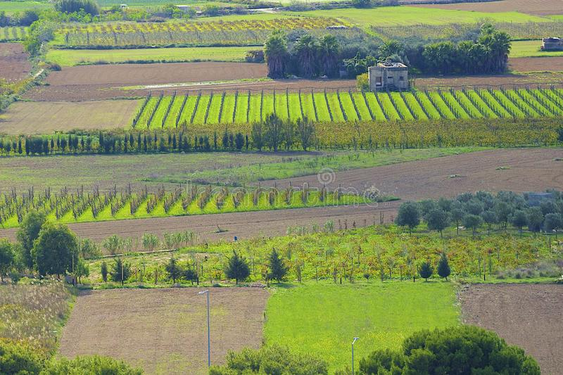 Farmlands in Malta. Panorama of farmlands and agriculture in north Malta royalty free stock photography