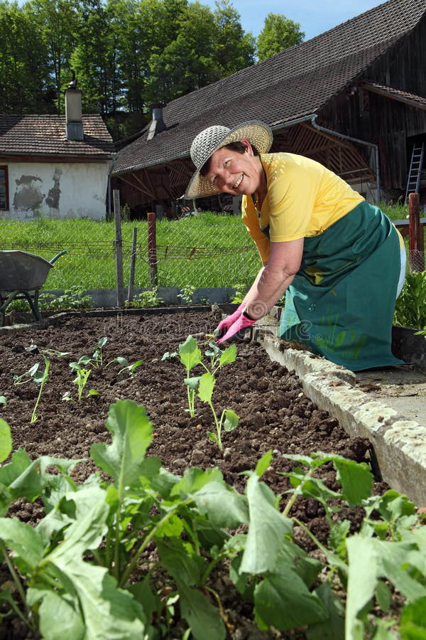 Farmor Som Planterar Grönsaker Royaltyfria Foton
