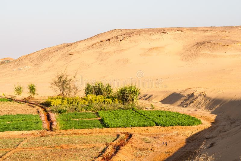 Farms at the edge of dunes. Dakhla oasis, egypt stock photography