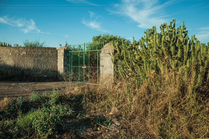Farmstead gate and flowering cactus next to the fence royalty free stock photo