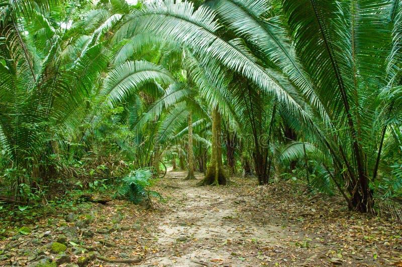 Farn-Dschungel stockfotografie
