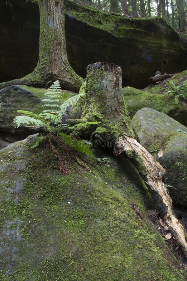 Farn- und Baumstumpf stockfotos