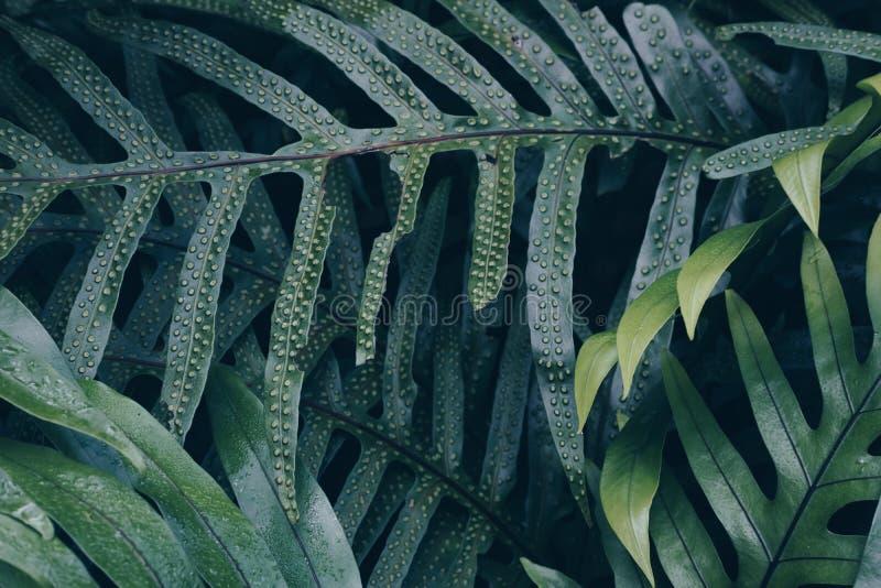 Farnbetriebsblatthintergrund Baum verlässt Muster grünes Laub c stockfotografie