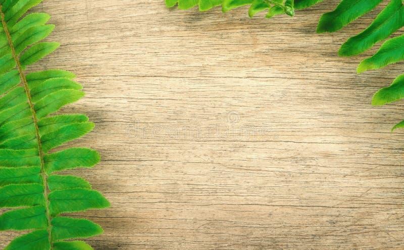 Farnblätter auf hölzernem Hintergrund lizenzfreies stockbild
