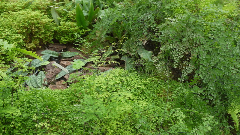 Farnblätter am Regenwald lizenzfreie stockfotos