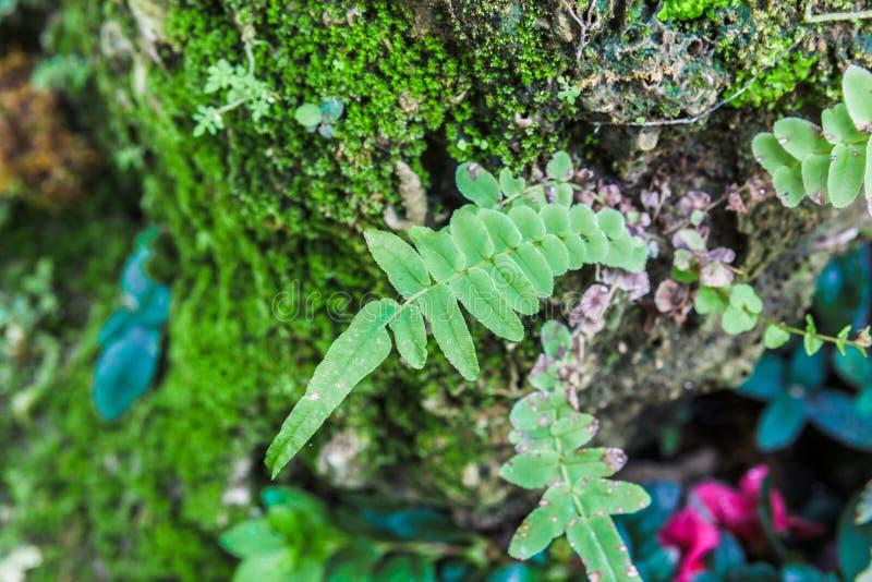 Farnblatt auf Baum mit MOS lizenzfreies stockfoto