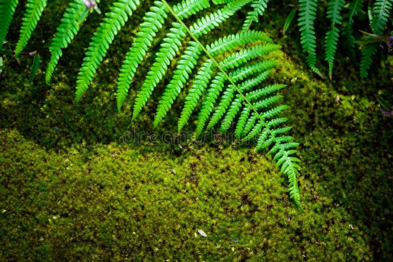 Farnblatt und MOS im Regenwald stockfoto