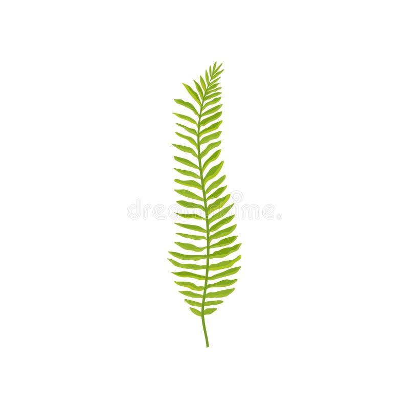 Farnniederlassung mit hellgrünen Blättern Wilde Waldanlage Natürliches Element Flacher Vektor für botanisches Buch, Gewebe oder vektor abbildung