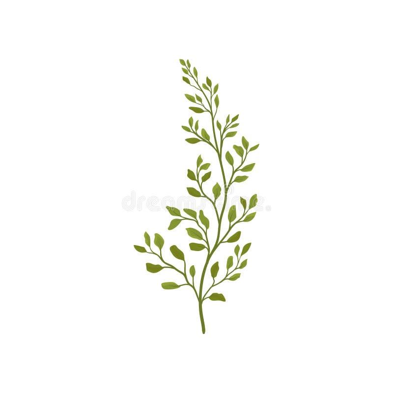 Farnniederlassung mit kleinem grünem Laub Forest Plant Flaches Vektorelement für Postkarte oder Plakat des Blumenladens lizenzfreie abbildung