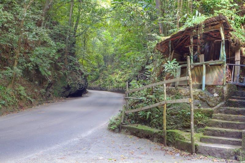 Farnsinkkasten in Jamaika stockbild