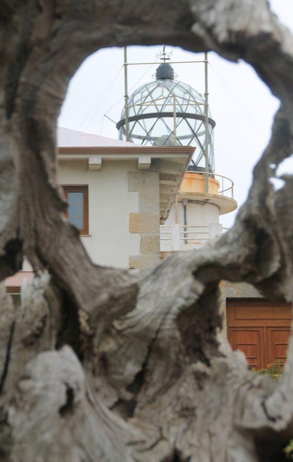 Faro da Estaca de Bares, Mañón, A Coruña ( Spain ). Lighthouse in Estaca de Bares through a dry tree. Mañon, A Coruña (Spain stock images