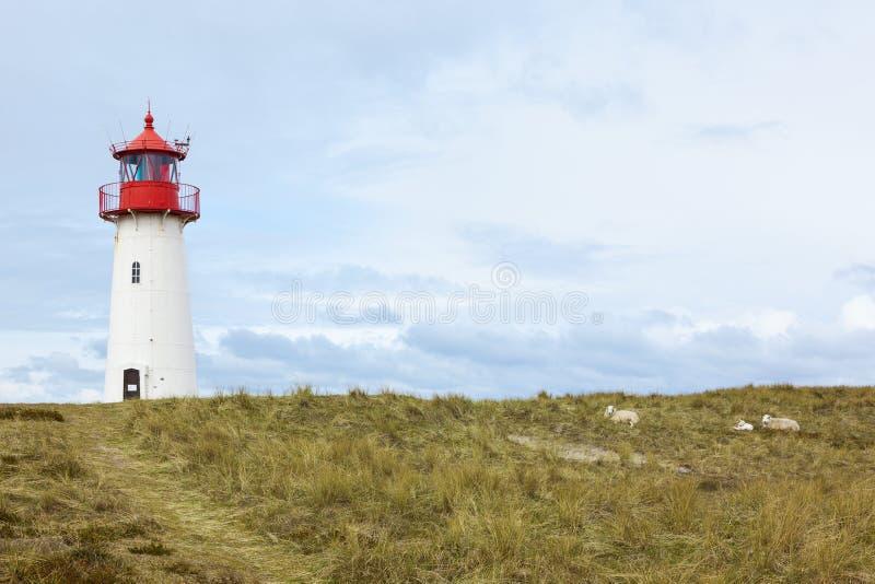 Faro del Lista-oeste, Sylt, oveja en las dunas imagenes de archivo