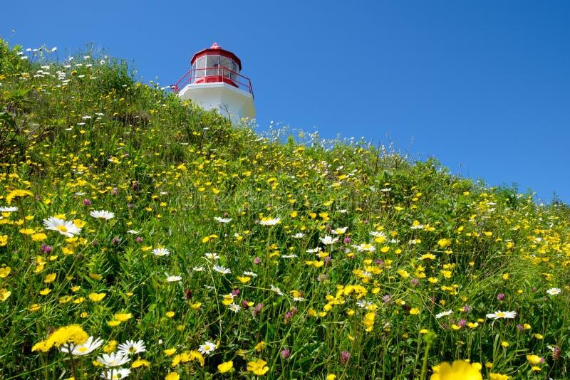 Faro e fiori immagini stock libere da diritti