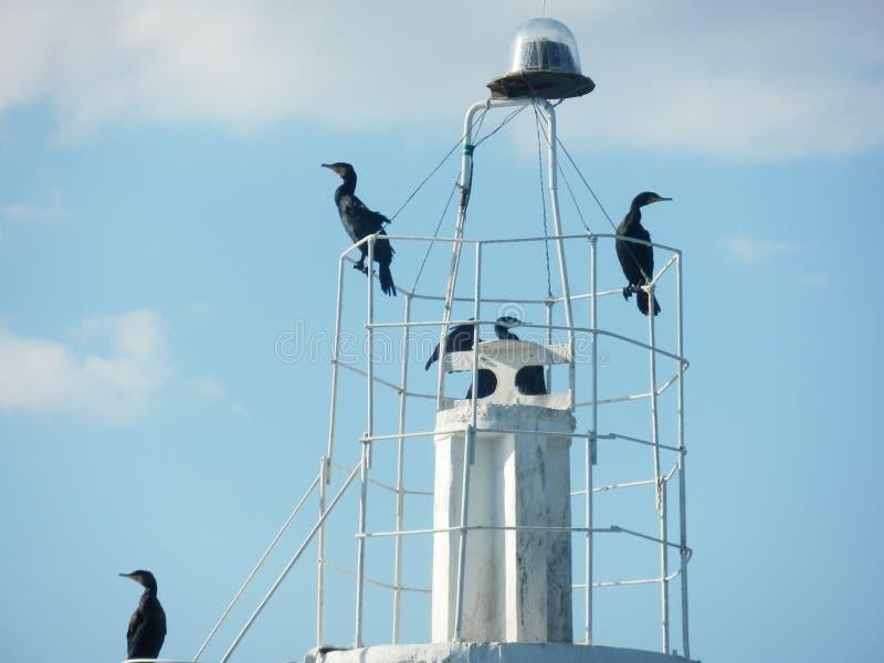 Faro y cormoranes imagenes de archivo