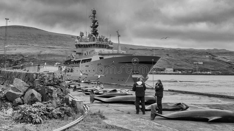 Faroe Islands royalty free stock images