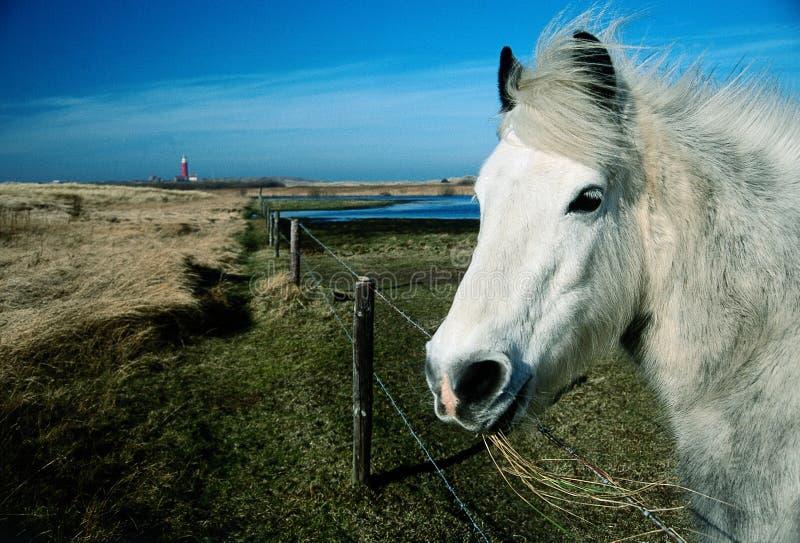 Farol do whit do retrato do cavalo branco foto de stock