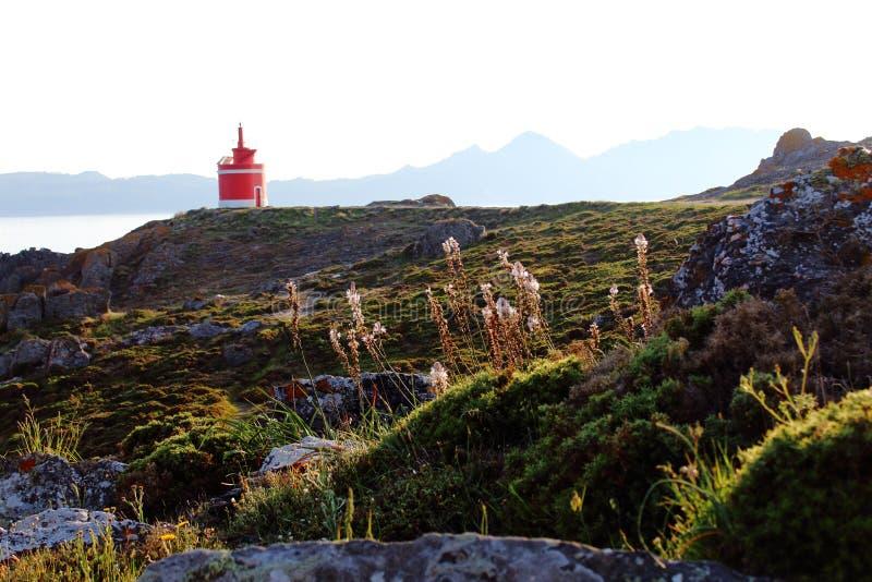 Farol vermelho e branco em Punta Robaleira Galiza, Espanha, flores no primeiro plano imagem de stock royalty free