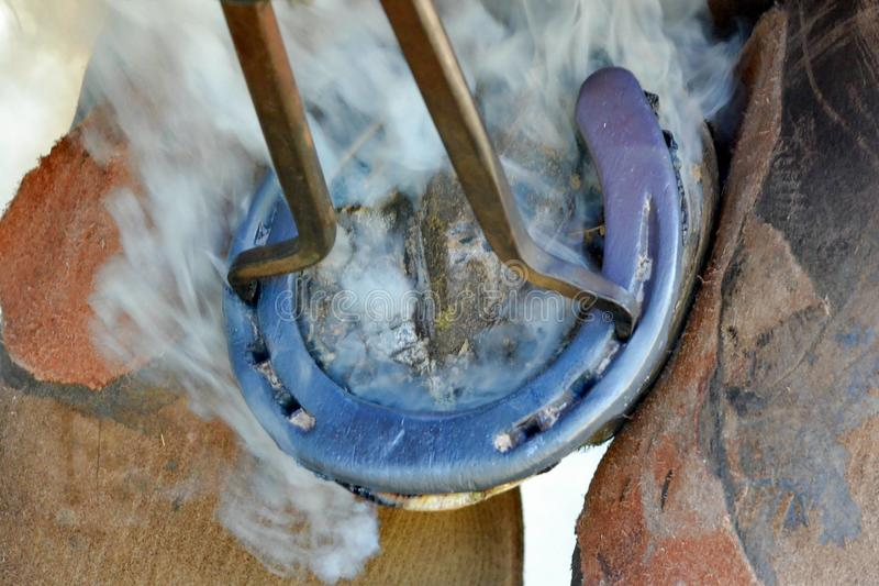 Farrier applying hot shoe to hoof of horse royalty free stock photos