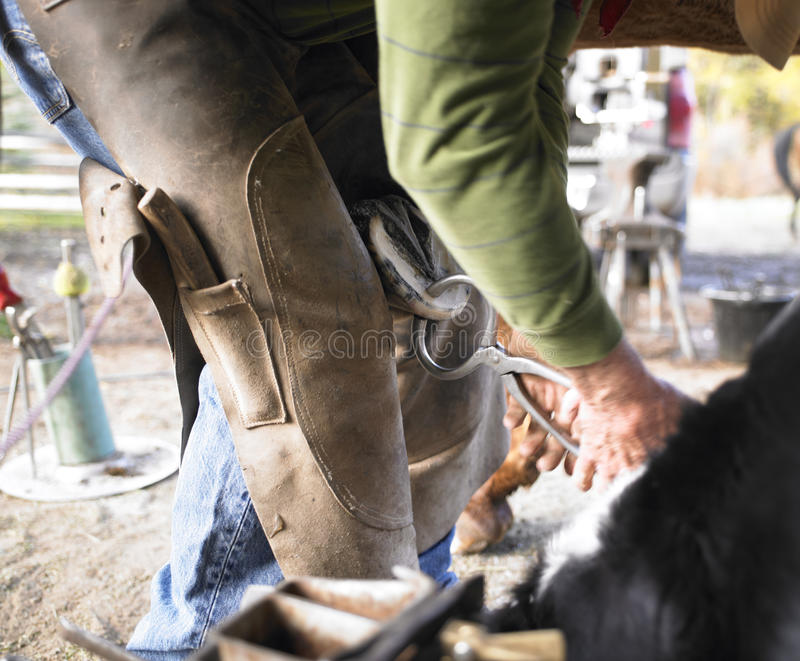 Farrier Clipping Horse Hoof royalty free stock photography