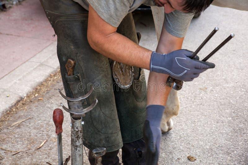 Farrier do cavalo que trabalha na manhã fotos de stock