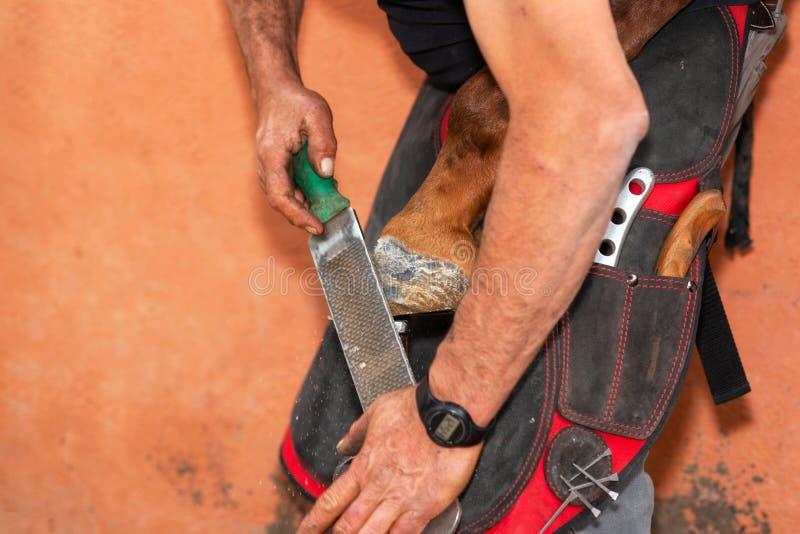 Farrier no trabalho no casco dos cavalos fotos de stock royalty free