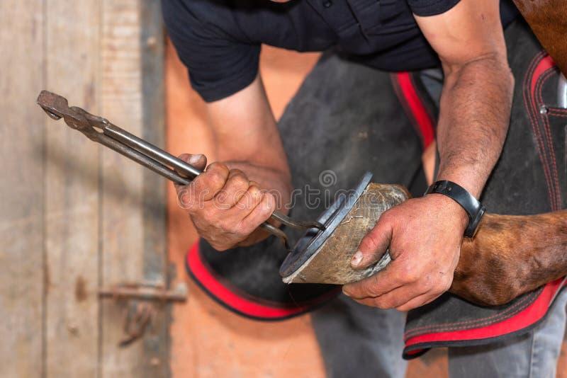 Farrier på arbete på hästklöven royaltyfri fotografi