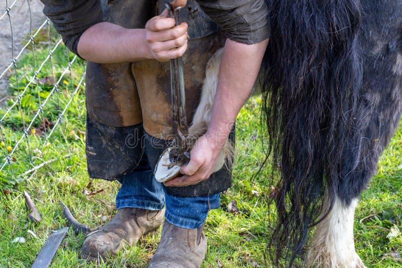 Farrier que trabalha nos cascos de um p?nei de Shetland foto de stock royalty free